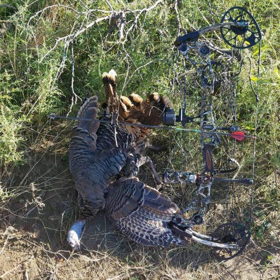 turkey hunts