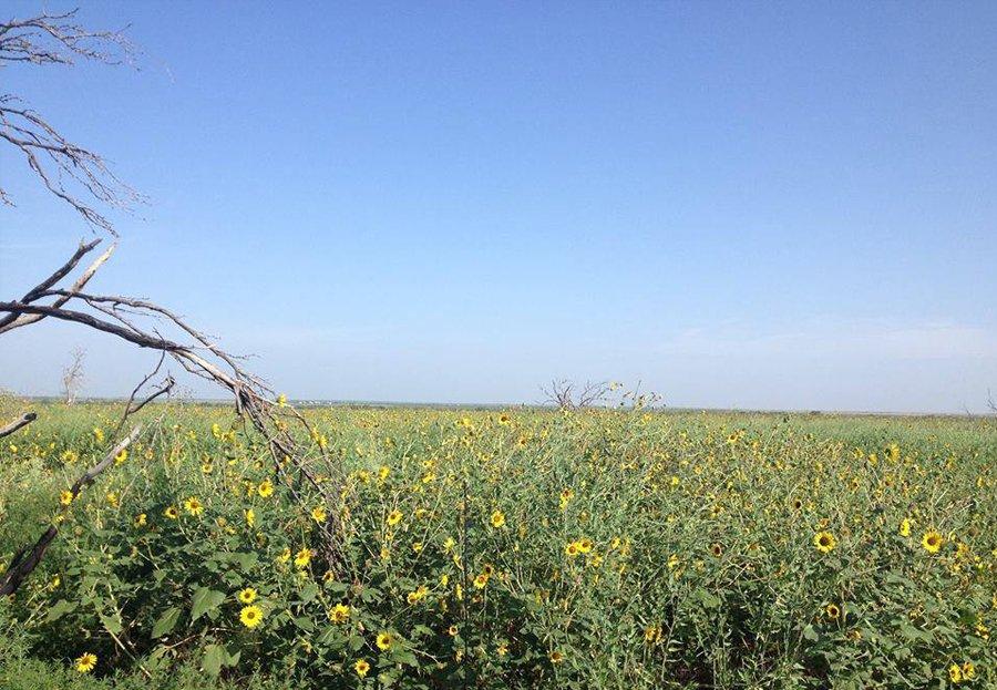 hunting ranch in Abilene